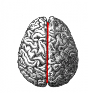 Human_brain_longitudinal_fissure